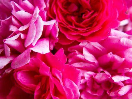 Acqua di rose e spezie per la bellezza